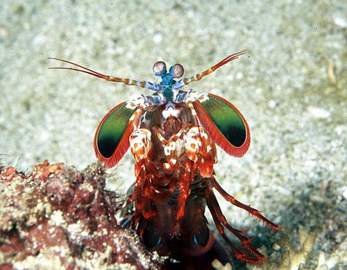invertebrates of kashiwajima